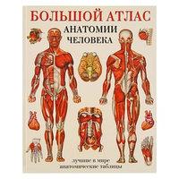 'Большой атлас анатомии человека', Махиянова Е. Б.