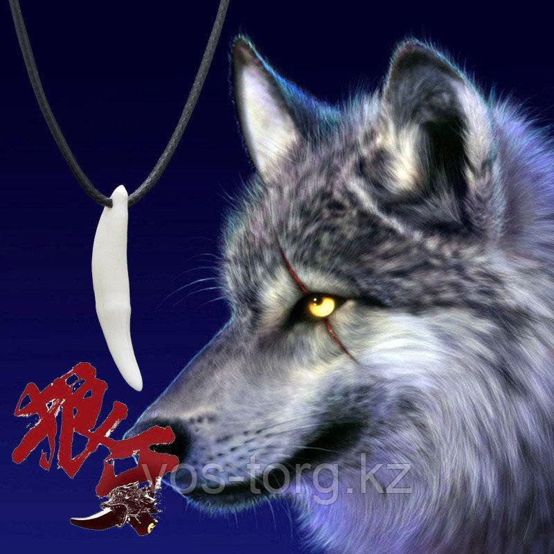 "Кулон на шнурке ""Клык волка"" 5 cm"