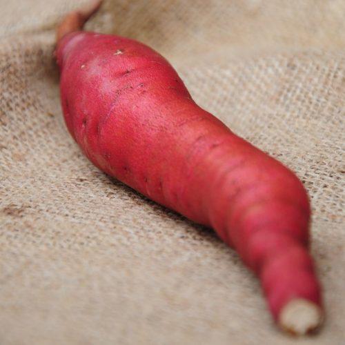 Батат Сладкий картофель рассада cорт Гарнет