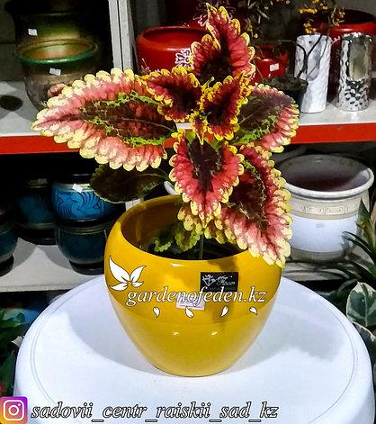 Керамический горшок для цветов. Объем: 1л. Цвет: Желтый., фото 2