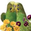 Корм для мелких и средних попугаев