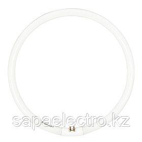 Лампы люминесцентные фигурные - Тип Т5, T9, 2D