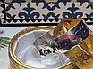 Блезік женский серебро 925пробы, фото 3