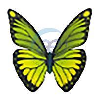 Бабочка «Polish-1» (цвет на выбор)