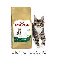 Royal Canin MaineCoon Kitten Корм для котят Мэйн-Кун до 15мес 4кг арт.S23612