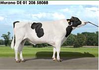 Семя быка Мурано-М, Германия