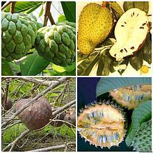 Экзотические растения (Плодовые)