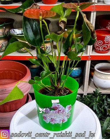 Пластиковый горшок для орхидей. Цвет: Зеленый. Объем: 1.8л, фото 2