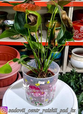 """Пластиковый горшок для орхидей """"Камилла"""". Цвет: Прозрачный. Объем: 1.8л, фото 2"""