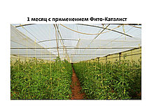 Препарат Фито-Каталист