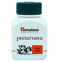 Punarnava (Пунарнава) Himalaya- омолаживает весь организм, эффективно поддержит функцию почек, 60 капсул, фото 1