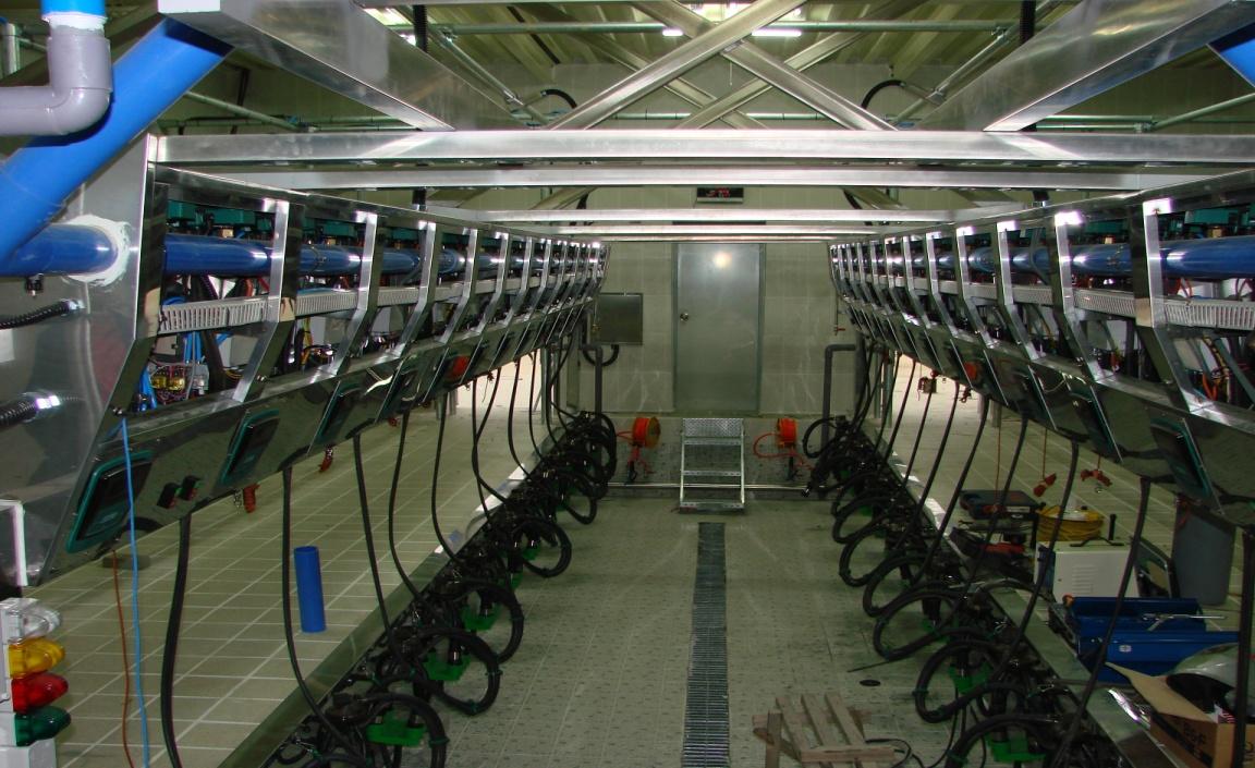 Доильный зал корпуса 550 голов КРС привязного содержания