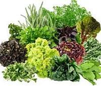 Зеленые и пряно-ароматические ...