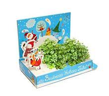 Подарочный набор Живая открытка Зеленого Нового года