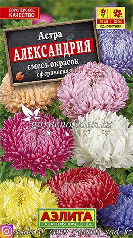 """Семена астры Аэлита """"Александрия, смесь окрасок""""., фото 2"""