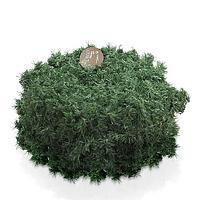 Гирлянда еловая 30м зеленая d0,2м 1980 веток KA680435