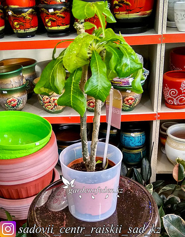 """Пластиковый горшок для орхидей """"Соломон"""". Цвет: Прозрачный. Объем: 1.6л, фото 2"""
