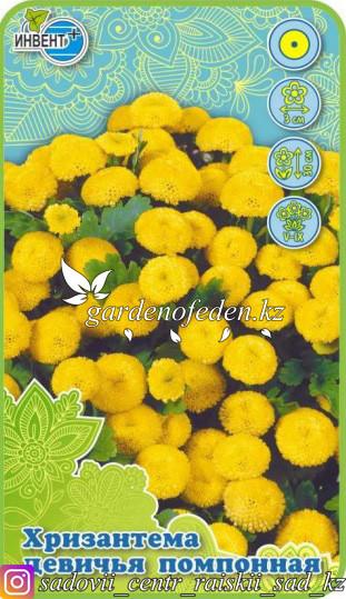 Семена хризантемы девичьей помпонной