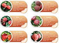 Профессиональные саженцы персика, фото 7