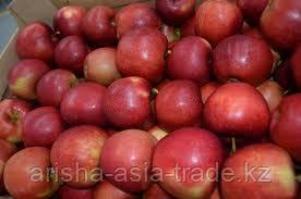 Саженцы яблони М9 Idared