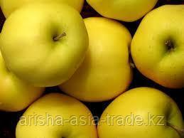 Саженцы яблони м9 Golden Delicious