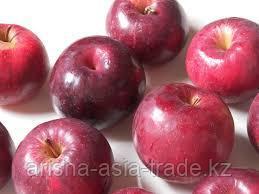Саженцы яблони м9 Jonared