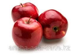 Саженцы яблони м9 Red chief
