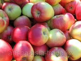 Саженцы яблони м9 Sunrise