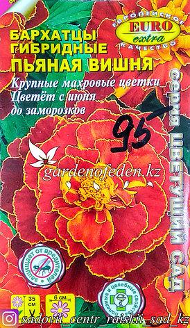 "Семена бархатцев гибридных - Euro Extra ""Пьяная вишня"", фото 2"