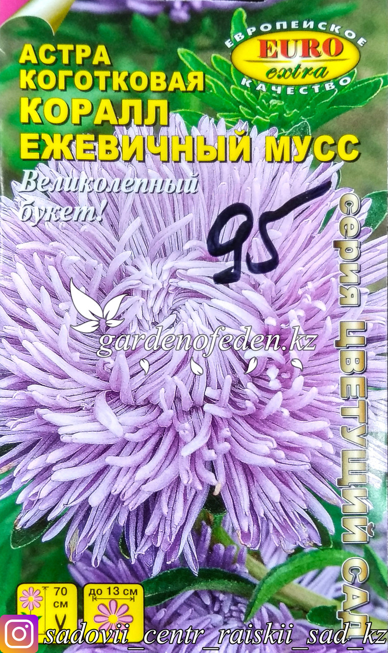 """Семена астры коготковой - Euro Extra """"Ежевичный мусс"""""""