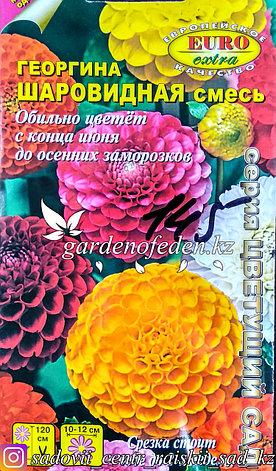 """Семена георгины шаровидной - Euro Extra """"Шаровидная, смесь"""", фото 2"""