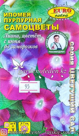 "Семена ипомеи пурпурной - Euro Extra ""Самоцветы"", фото 2"