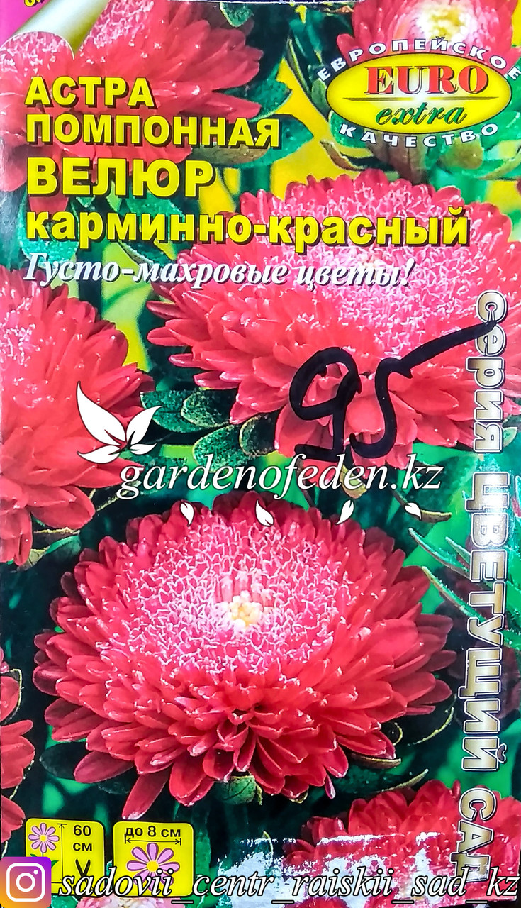 """Семена астры помпонной - Euro Extra """"Велюр Карминно-красный"""""""