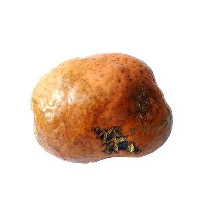 Африканский орех от бесплодия - мохилхин, фото 2