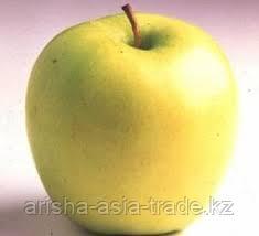 Саженцы яблони м9 Goiden Dilicious Reinders