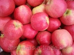 Саженцы яблони м9 Pink Lady