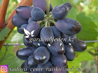 "Виноград ""Кодрянка"""