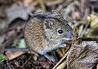 Уничтожение мышей дератизация, фото 3