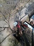 Спил обреска кронирование деревьев, фото 6