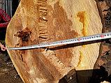 Спил обреска кронирование деревьев, фото 8
