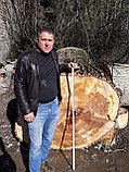 Спил обреска кронирование деревьев, фото 9