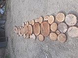 Спил обреска кронирование деревьев, фото 10
