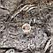 Пакля смолянная (пакля пропитанная), фото 2