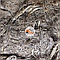Пакля смолянная (пропитанная), фото 2