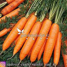 """Профессиональные семена. Морковь """"Нантская 4""""."""