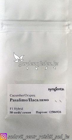 """Профессиональные семена. Огурец """"Пасалимо F1"""",5 штук., фото 2"""
