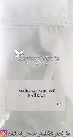 """Профессиональные семена. Майоран садовый """"Байкал"""". , фото 2"""