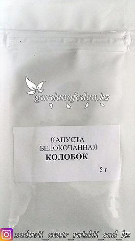 """Профессиональные семена. Капуста белокочанная """"Колобок"""",10 штук ., фото 2"""
