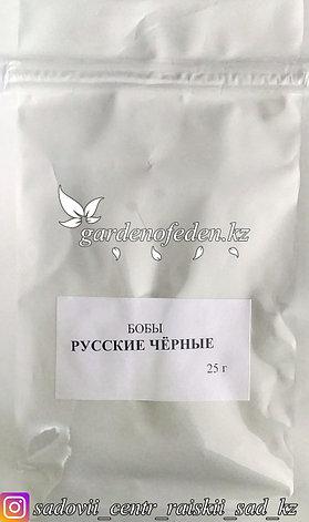 """Профессиональные семена. Бобы """"Русские черные"""",3 штук, фото 2"""