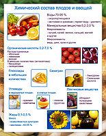 Плакаты Овощи, фото 1